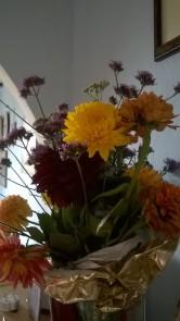 mums-flowers